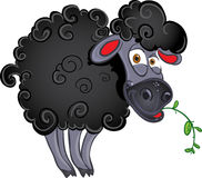 Black dark sheep with blade of grass Royalty Free Stock Photo