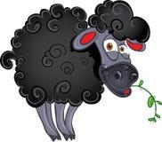 Black dark sheep with blade of grass royalty free stock photo