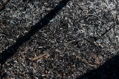 Black dead burned field royalty free stock image