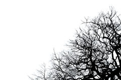 Black dead tree silhouette. Isolated on white background royalty free stock image