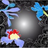Black decorative background with iris Stock Image
