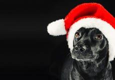 Black den labrador mixhunden som slitage en Santa hatt Arkivfoto