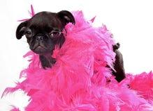 black den rosa mopsvalpen för boaen royaltyfri bild