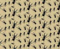 Black different sizes Bugs pattern vector illustration