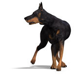 Black Doberman Dog. 3D rendering with clipping Stock Photo
