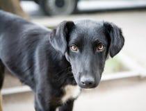 Black dog. Outdoors. Sad eyes Stock Photo
