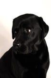 Black dog Stock Photo