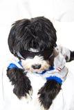 Black dog. Bad black dog and sounglasses Stock Images