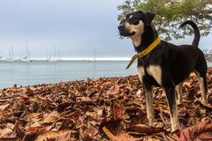 Black dog in autumn afternoon Royalty Free Stock Photo