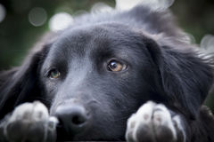 The Black Dog. The dog on the banch Stock Photos