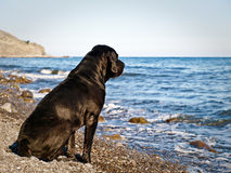 Black dog on a beach. Sea and black dog is looking at the water Stock Image