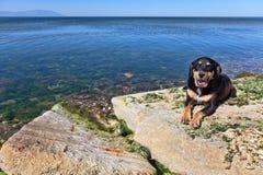 Black dog on the beach Stock Image