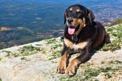 Black dog on the beach Royalty Free Stock Photos