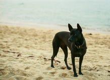 Black dog on a beach Stock Photo