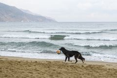 Black dog on the beach royalty free stock images