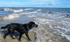 A black dog on the beach stock image