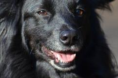 Black dog in Berlin. Black dog in People`s Park Volkspark Rehberge in Berlin Stock Photos