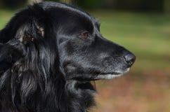 Black dog in Berlin. Black dog in People`s Park Volkspark Rehberge in Berlin Stock Photo