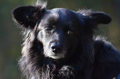 Black dog in Berlin. Black dog in People`s Park Volkspark Rehberge in Berlin Stock Image