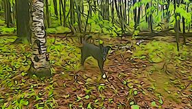Black dog and birch tree in forest royalty free illustration