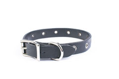 Black dog collar Royalty Free Stock Images