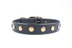 Black dog collar Stock Photos