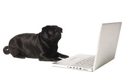 Black dog at the computer Stock Photo