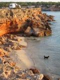 Black Dog on an empty beach. Black Dog waiting on an empty beach in Formentera - Cala Saona - Baleares Islands stock images