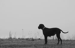 Black dog on empty field standing Royalty Free Stock Photos