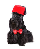 Black dog in fez Royalty Free Stock Photo
