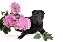 Black Dog with Flowers Royalty Free Stock Images