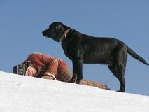 Black dog with a girl. Black labrador with its owner in the snow Stock Image