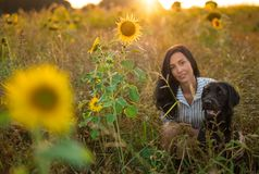 Black dog with girl posing in sunflower field. stock images