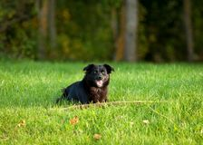 Black dog on grass Stock Photo