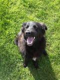 Black dog on grass stock image