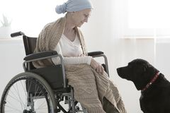 Woman and a dog. Black dog helping a woman on oncology ward get better through pet therapy Royalty Free Stock Photo