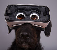 Black dog immersed in virtual reality Stock Photo