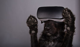 Black dog immersed in virtual reality. On grey background stock photography