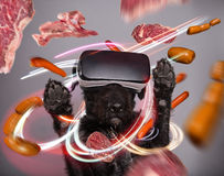 Black dog immersed in virtual reality Stock Image