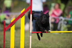 Black dog jumping on agility competition Royalty Free Stock Photography