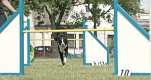 A black dog jumping over two obstacles 4K FS700 Odyssey 7Q stock footage