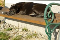 Dog is lying on garden bench. Black dog lies comfortably in the sun on a park bench Royalty Free Stock Image