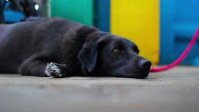 Black dog lies sleeping on the floor of an iron on a cargo ferry stock footage