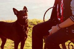 Black dog looking on man Stock Photos