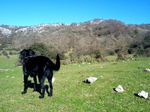 Black dog in a mountain landscape royalty free stock images