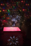 Black dog looks into box with sparkles. Black dog looks into a gift box where light is emitting from the box with sparkles and glitter Stock Photo