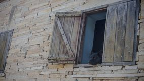 Black dog looking through the window of a rustic house royalty free stock photos