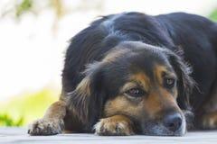 Black dog lying in the floor. Sad black dog lying in the floor Stock Images
