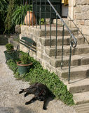Black dog lying near the stairway. Black dog lying nears the stairs and a picturesque bench Stock Photos