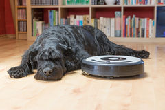 Black dog is lying next to the robotic vacuum cleaner Royalty Free Stock Photo